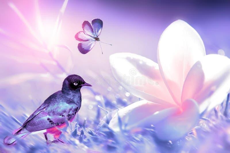 美丽的白色和桃红色热带花、小的热带鸟和紫色蝴蝶在飞行中在紫色草背景  免版税图库摄影