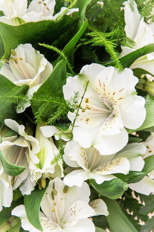 美丽的白色木槿花,欢乐花束 库存照片