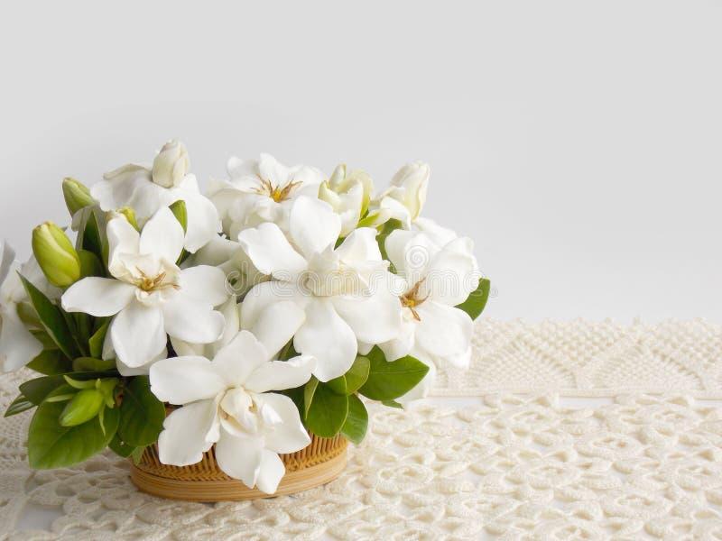 美丽的白色栀子花 免版税库存图片