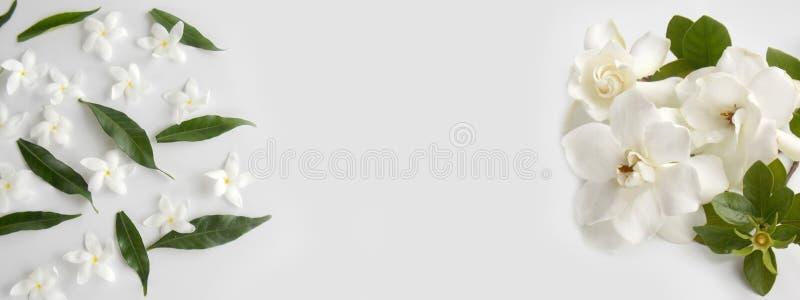 美丽的白色栀子花 免版税库存照片