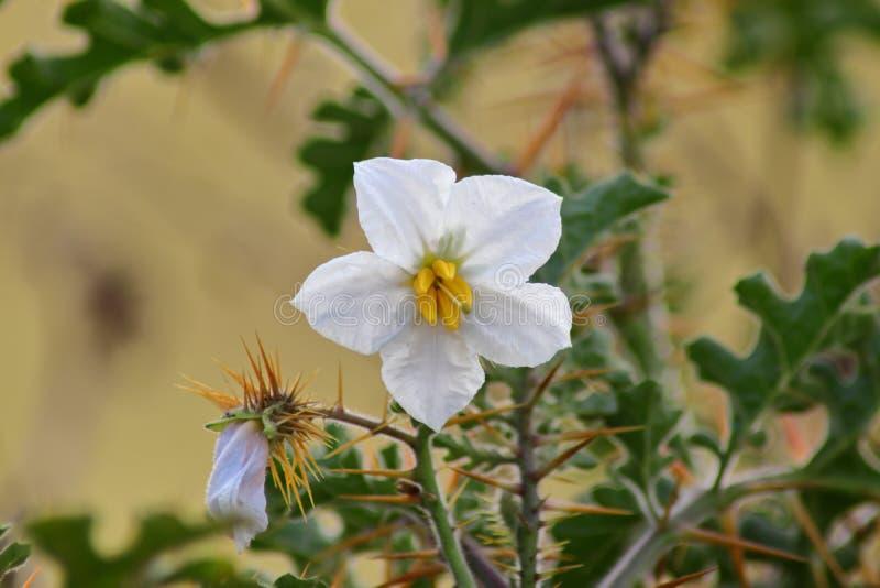 美丽的白色桥梁在froked植物中 免版税库存图片