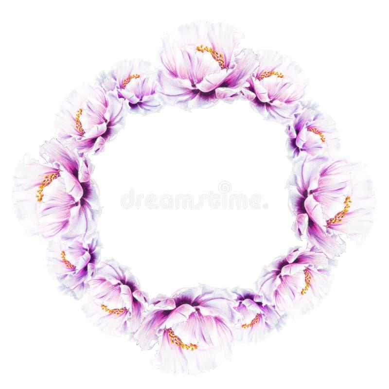 美丽的白色牡丹花圈 ?? 花卉图案 标志图画 向量例证