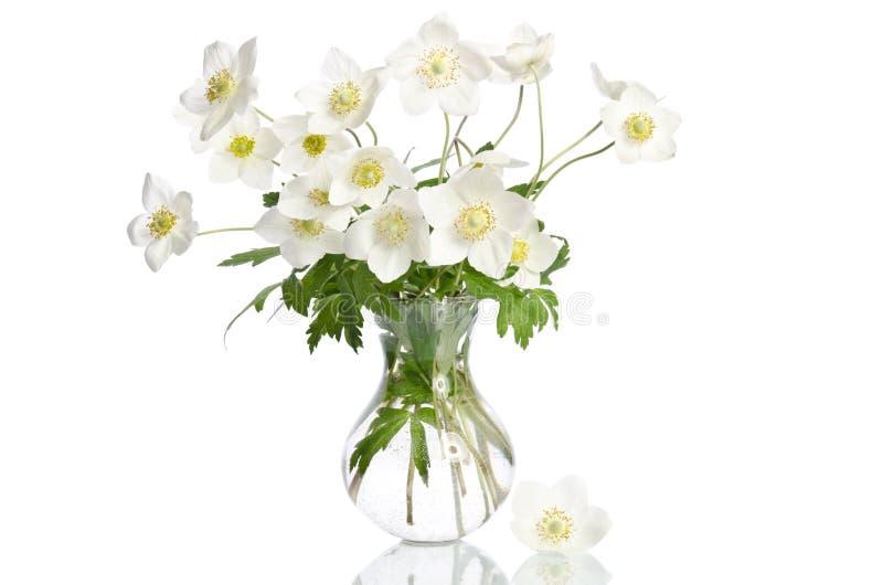 美丽的白色银莲花属花 库存图片