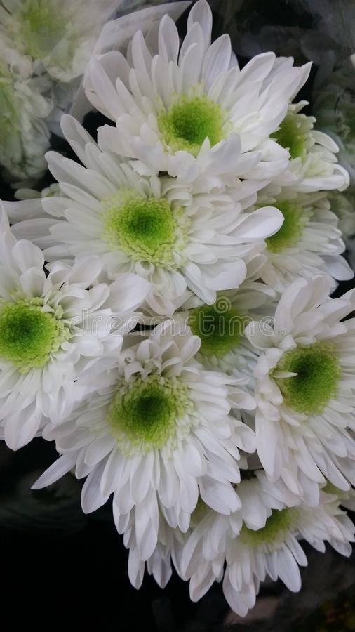美丽的白色绿色花 免版税库存照片
