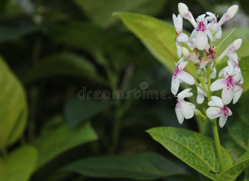 美丽的白花在庭院里 免版税图库摄影