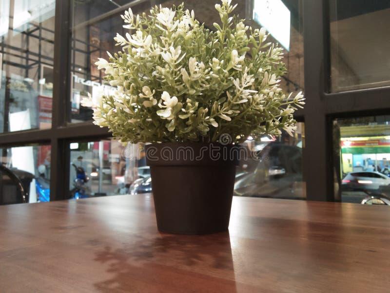 美丽的白花被看见提供放松 免版税库存照片