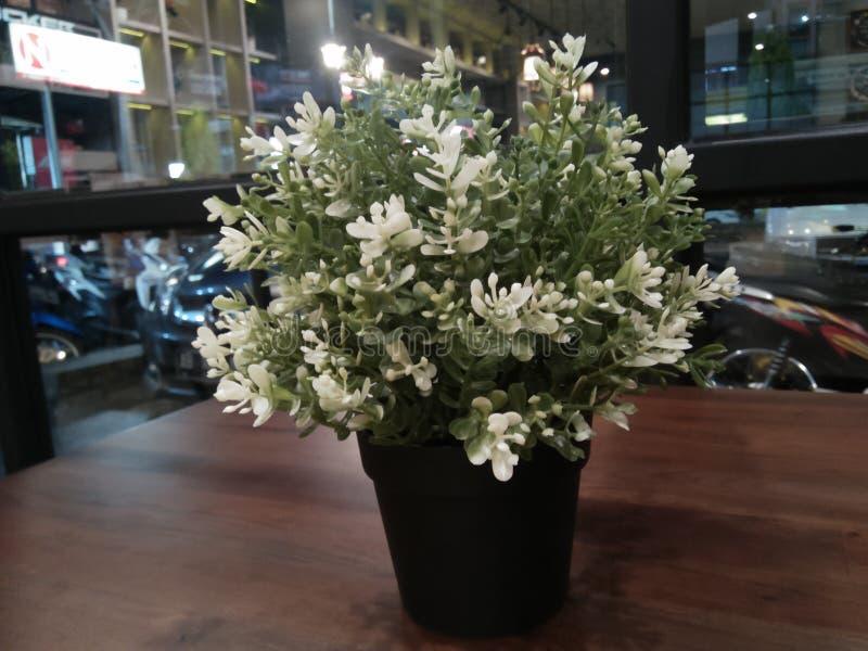 美丽的白花被看见提供放松 免版税图库摄影