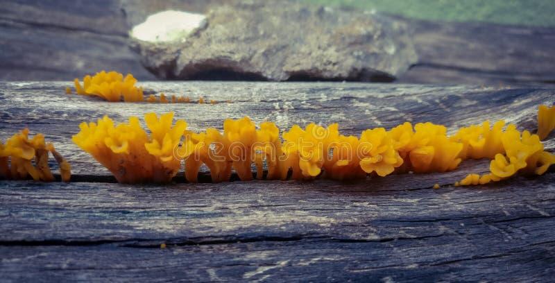 美丽的真菌 免版税库存图片