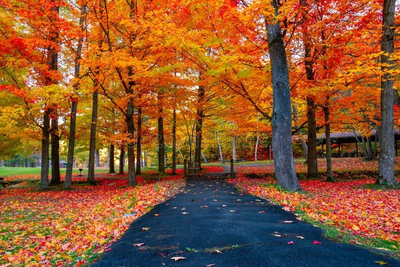 美丽的秋叶在东北美国 免版税库存照片