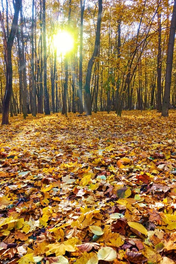 美丽的秋天公园 图库摄影