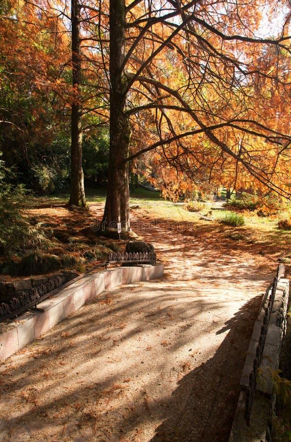 美丽的秋天公园 免版税库存照片