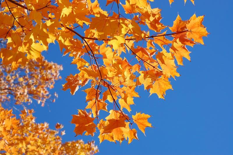美丽的秋天叶子 免版税库存图片