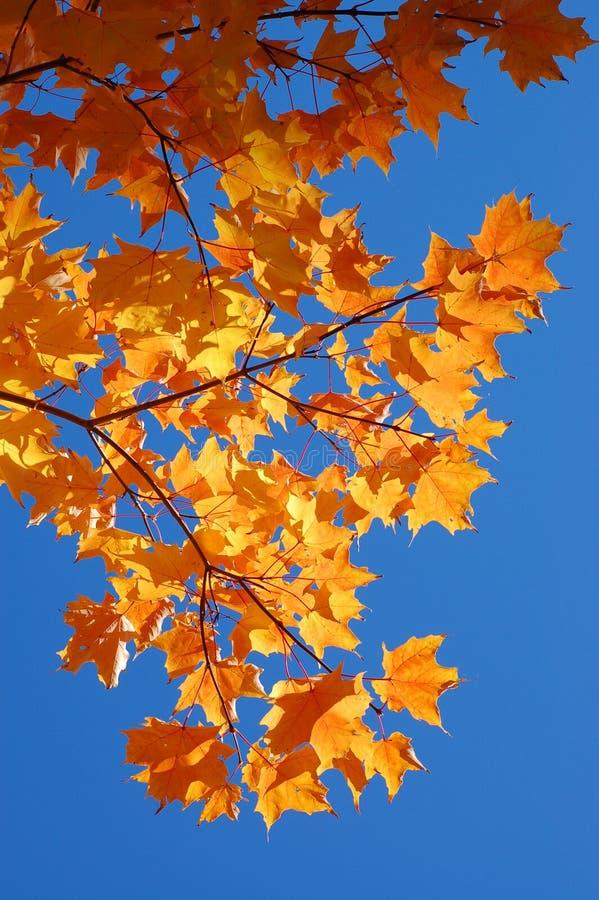 美丽的秋天叶子 免版税图库摄影