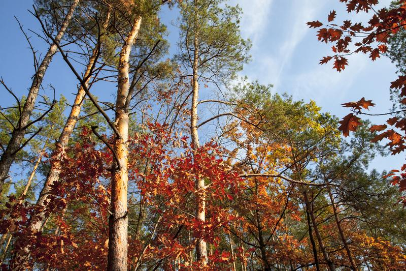 美丽的秋天树和杉木在橙色的森林和太阳照亮的红色树里在一秋天天 库存照片