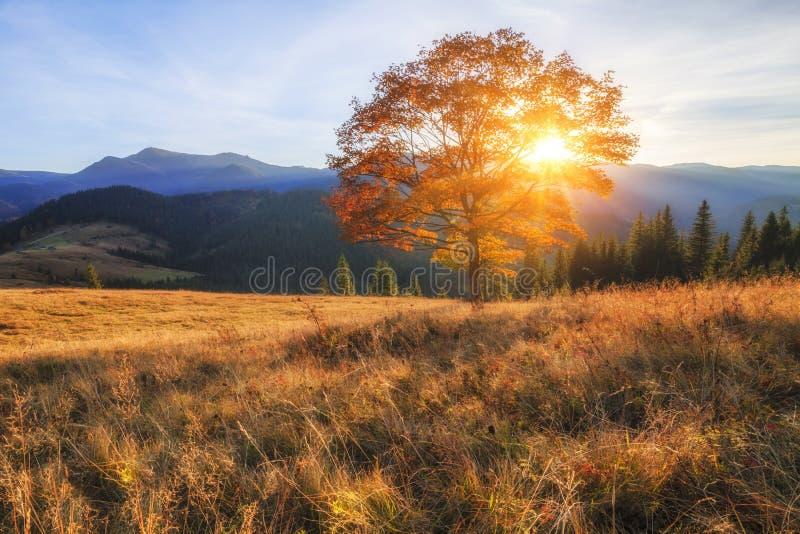 美丽的秋天树在阳光下 库存图片