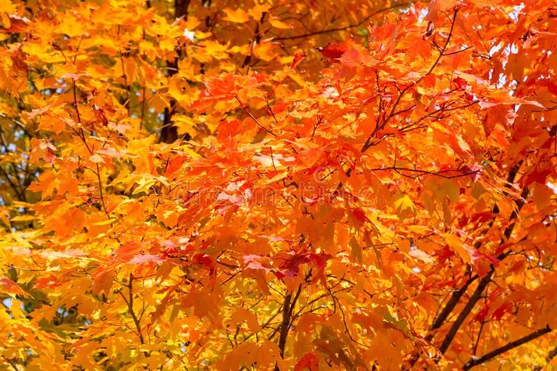 美丽的秋天树 库存照片