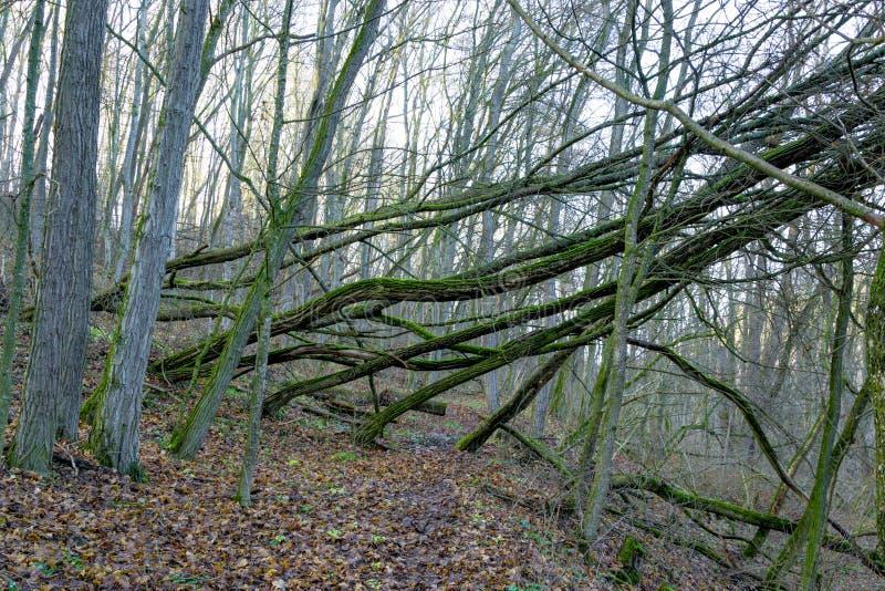 美丽的秋天森林,在橙色小山的许多树 免版税图库摄影