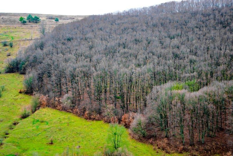 美丽的秋天森林,在橙色小山的许多树 免版税库存照片