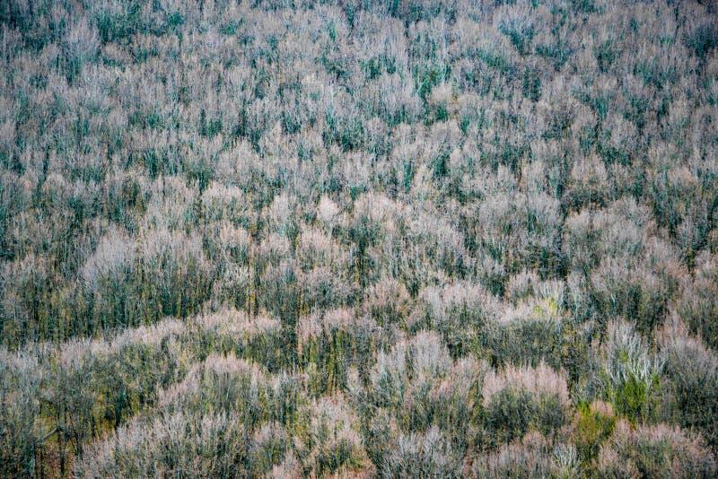 美丽的秋天森林,在橙色小山的许多树 图库摄影