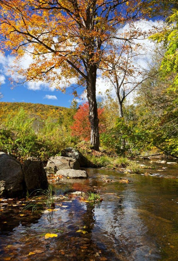 美丽的秋天流 库存图片