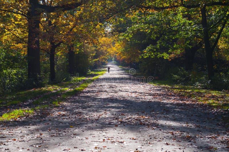 美丽的秋天胡同在晴天 库存图片