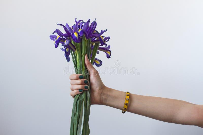 美丽的紫罗兰刻花春天花束在有修指甲的一只女性手新近地使现虹彩在白色背景 免版税库存图片