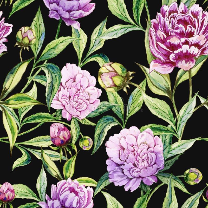 美丽的紫色牡丹开花与在黑背景的绿色叶子 无缝花卉的