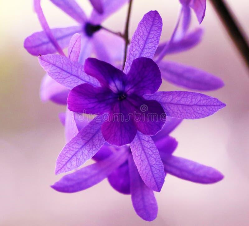 美丽的紫色紫罗兰色花,华美的自然 库存照片