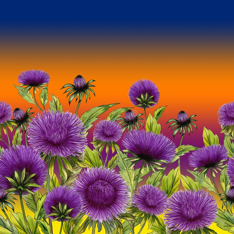 美丽的紫色翠菊开花与在明亮的梯度背景的绿色叶子 无缝花卉的模式 多孔黏土更正高绘画photoshop非常质量扫描水彩 库存例证