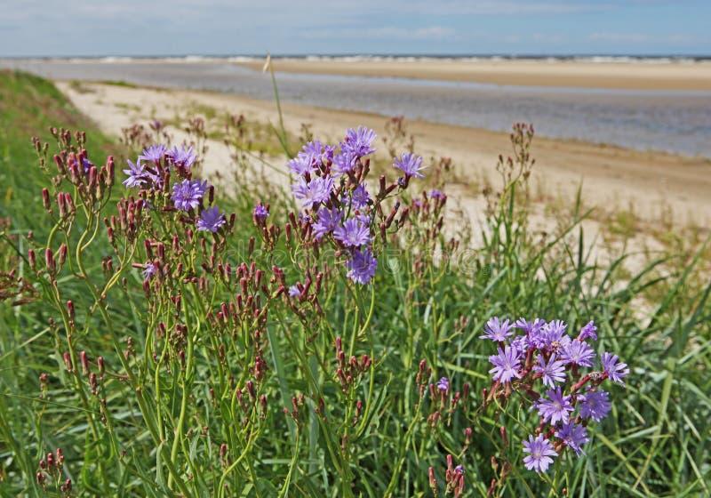 美丽的紫色花、海和盐水湖 库存图片