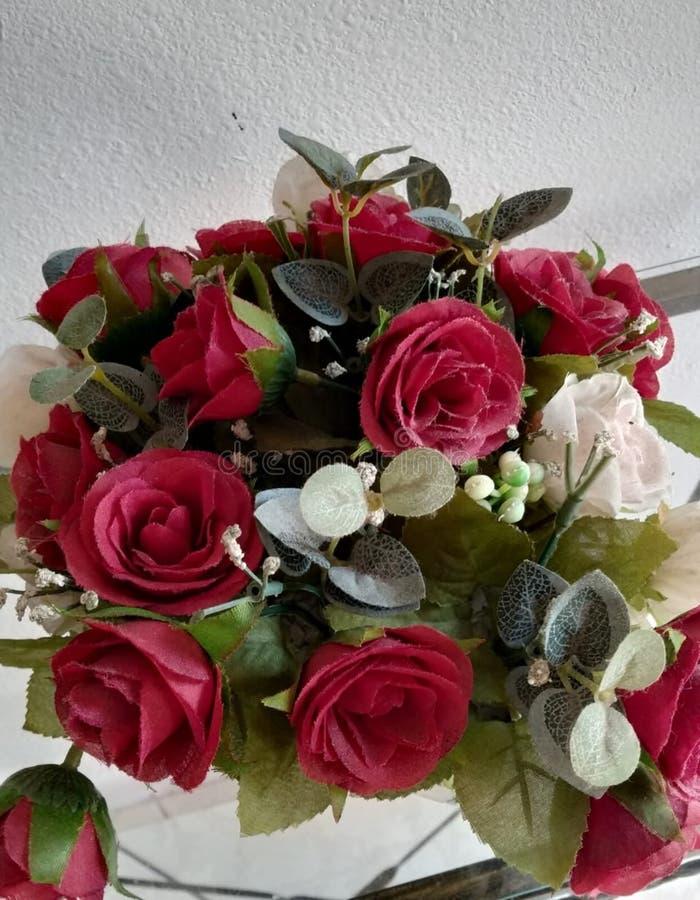 美丽的红色和白玫瑰花 免版税库存图片