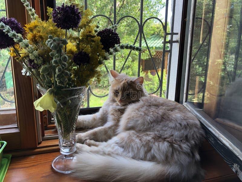 美丽的红色猫坐窗台在窗口和花旁边 免版税库存图片