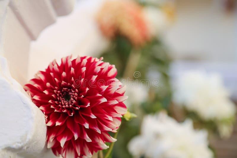 美丽的红色白花在庭院里 免版税库存图片