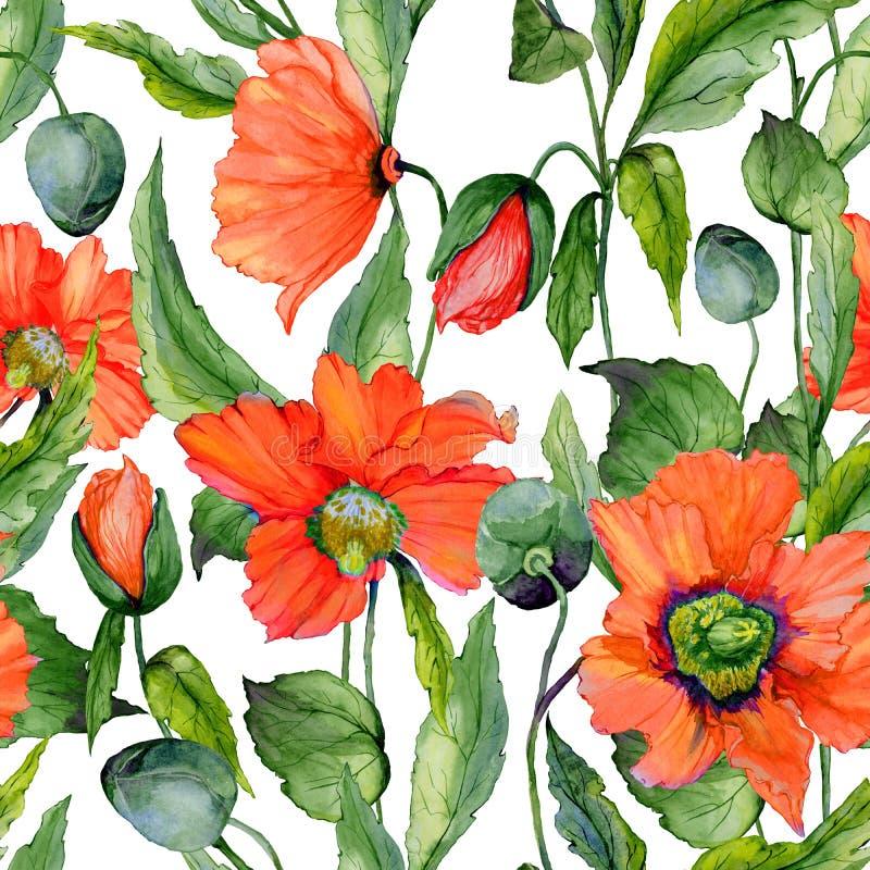 美丽的红色鸦片开花与在白色背景的绿色叶子 无缝的生动的花卉样式 多孔黏土更正高绘画photoshop非常质量扫描水彩 向量例证