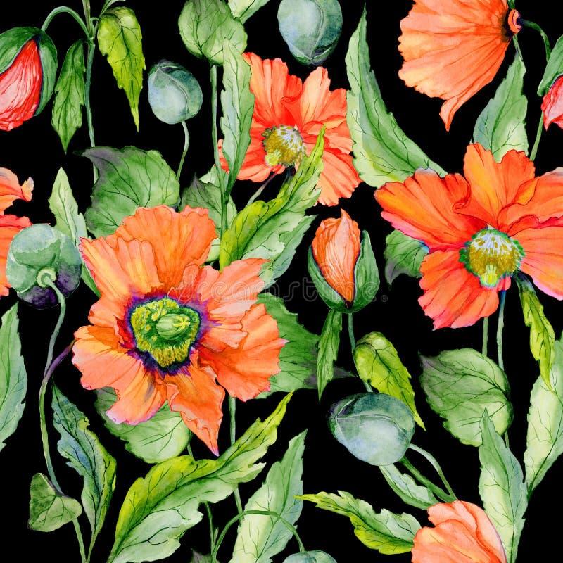 美丽的红色鸦片开花与在黑背景的绿色叶子 无缝花卉的