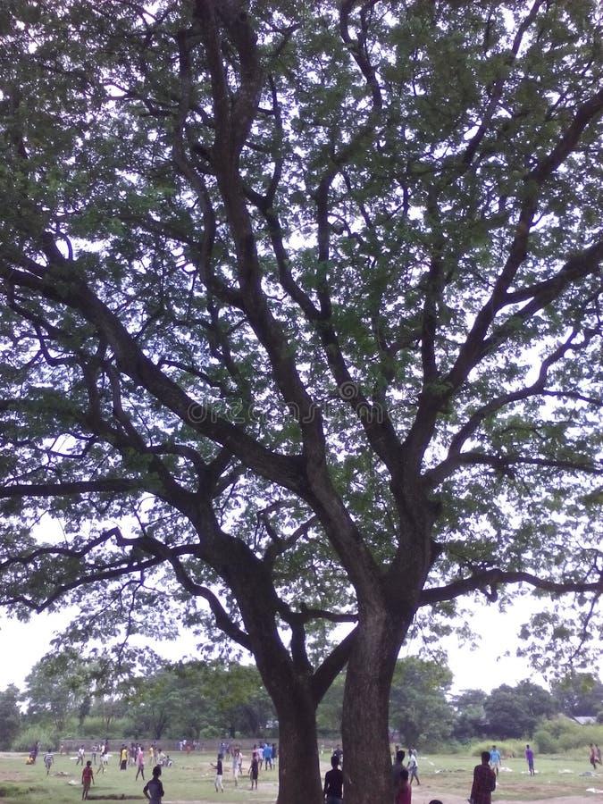 美丽的结构树 图库摄影