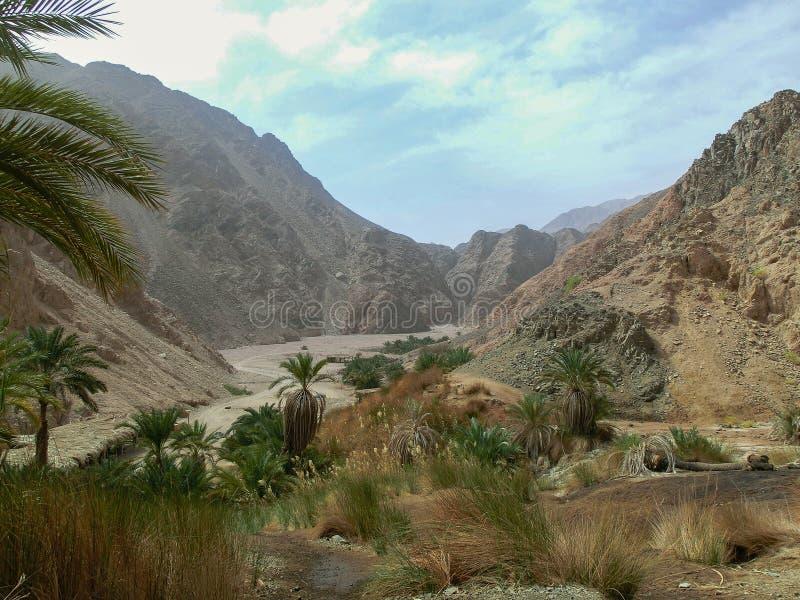 美丽的绿洲在沙漠有棕榈和山景,Sharm El谢赫,埃及 库存照片