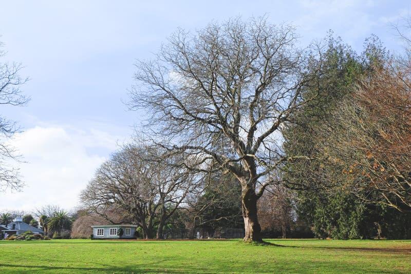 美丽的绿色公园,绿草田绿树的公园 新西兰克赖斯特彻奇哈格利公园 库存图片