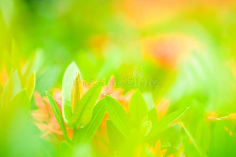 美丽的绿色年轻人自然视图在五颜六色的后面离开 库存照片