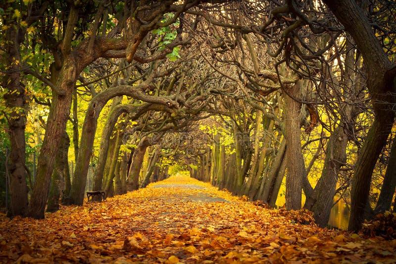 美丽的胡同在秋季公园 库存照片