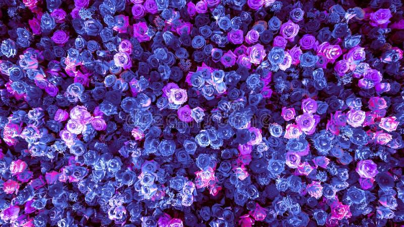 美丽的自然蓝色玫瑰开花特殊场合横幅的背景 图库摄影