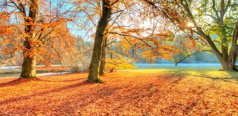 美丽的色的树在秋天,风景摄影 免版税图库摄影