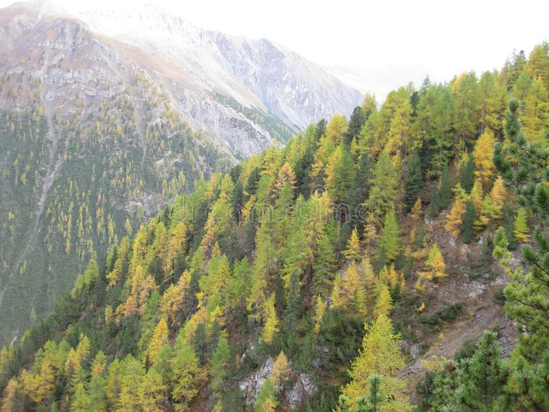 美丽的色的森林在秋天在一美妙的天 图库摄影