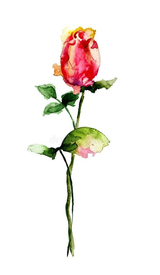 美丽的花上升了 皇族释放例证