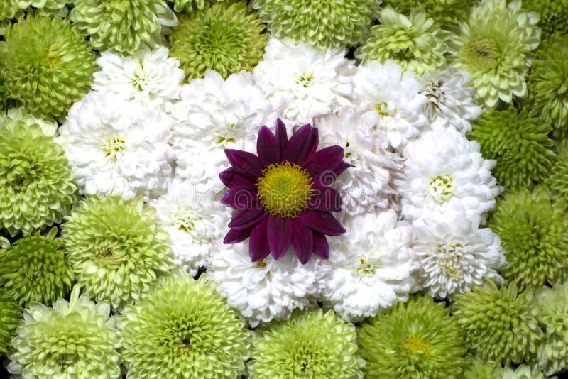美丽的花卉背景花 库存图片
