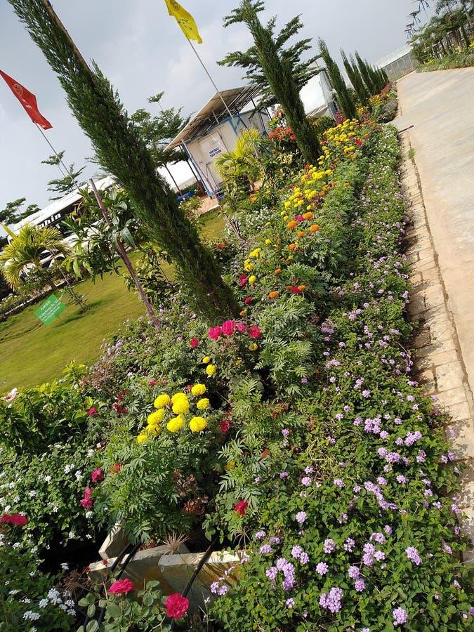 美丽的花厂 免版税库存图片