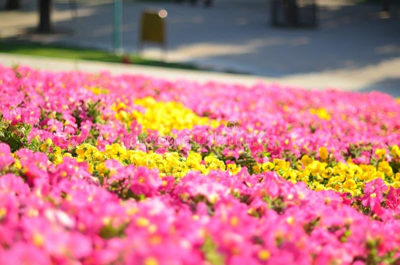 美丽的花在中国 库存图片