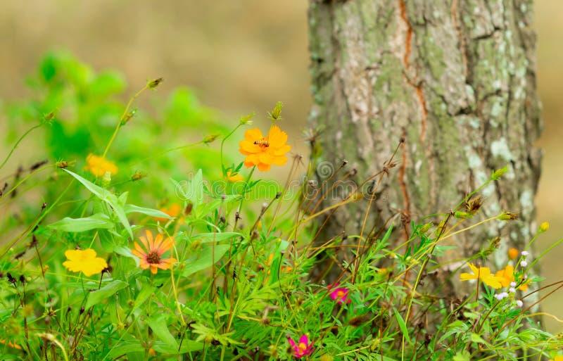 美丽的花在庭院农厂农厂房子里 免版税库存图片