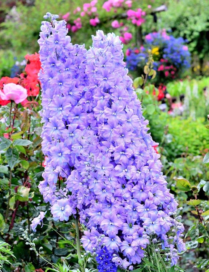 美丽的花在庭院里 图库摄影
