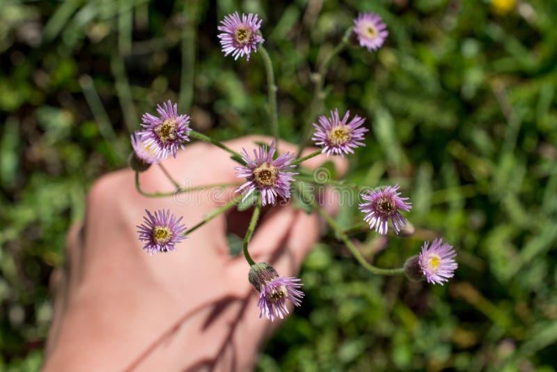 美丽的花在手中 免版税库存图片